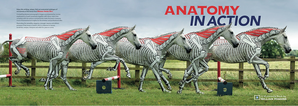 Anatomy in Action, video course, horse biomechanics, book, locomotion, study, movement