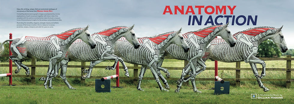 Anatomy in action book, video course in horse movement biomechanics by Gillian Higgins skeleton