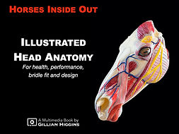 Illustrated horse head anatomy book and videos