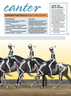 Uncovering Canter