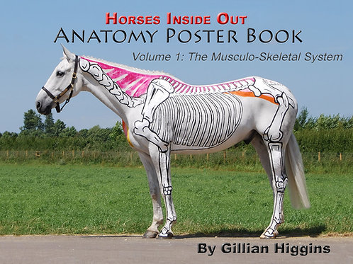 Anatomy Poster Book Vol 1: Musculoskeletal System
