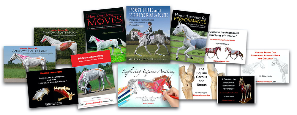 Book, horse biomechanics, anatomy, back, muscles, myofascial, horse riding, training, performance, mindfulness colouring, training, how your horse moves, reduce the risk of injury, pilates for horses,