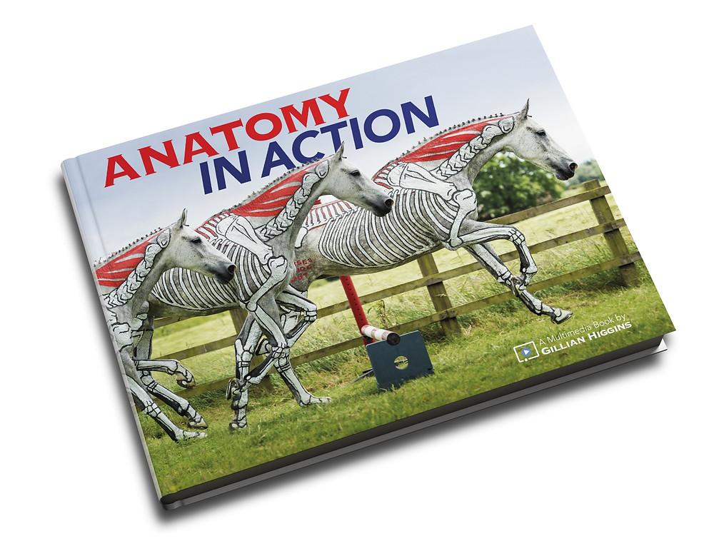 Anatomy in Action, horse biomechanics, skeleton, raised canter poles, equine locomotion, study of gaits