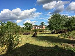 BLP Pony Field.JPG