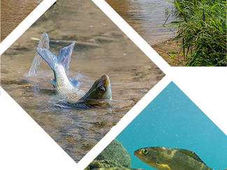 Massnahmenkonzept Hitzesommer und Fischerei