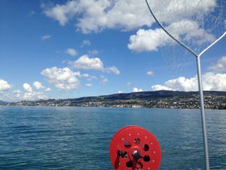 Änderung Ausführungsbestimmungen über die Fischerei im Zürichsee und Obersee gültig ab 1. Februar 20
