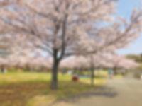 wakabadai-spring2019_02.jpg