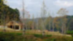 metsävillage_09.JPG