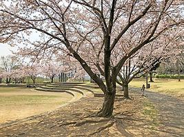 wakabadai-spring2019_03.jpg
