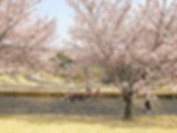 wakabadai-spring2019_05.jpg