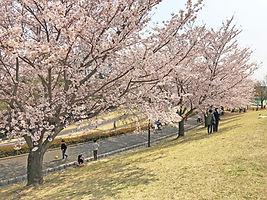 wakabadai-spring2019_04.jpg