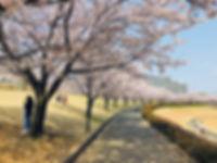 wakabadai-spring2019_01.jpg