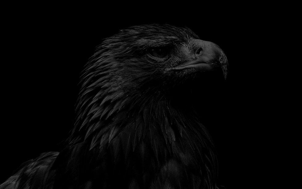 eagle_wallpaper.jpg