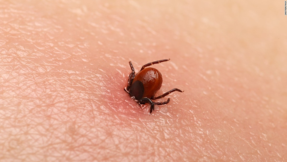 Connelly Law Blog Lyme Disease