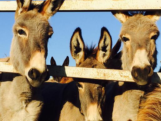 Golden Donkey Farm