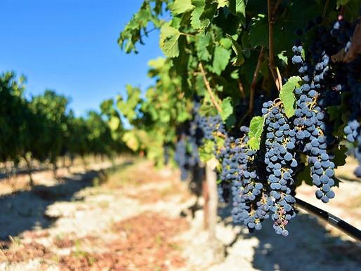 Cyprus Wineries