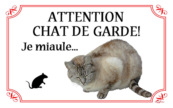 Chat 6