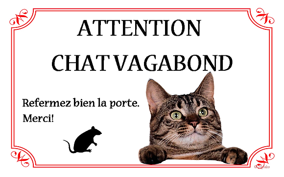 Chat 7