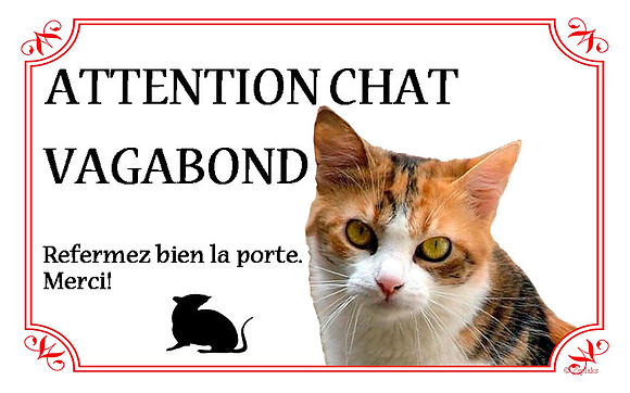 Chat 15