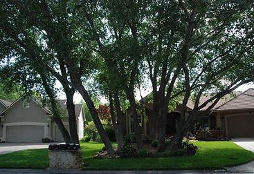 small frontyard landscape idea
