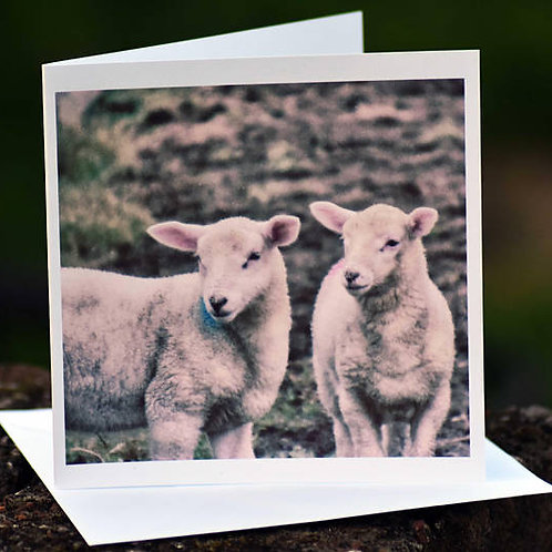 Greetings Card - Twin Lambs, Port Castle, Isle of Lismore, Argyll, Scotland