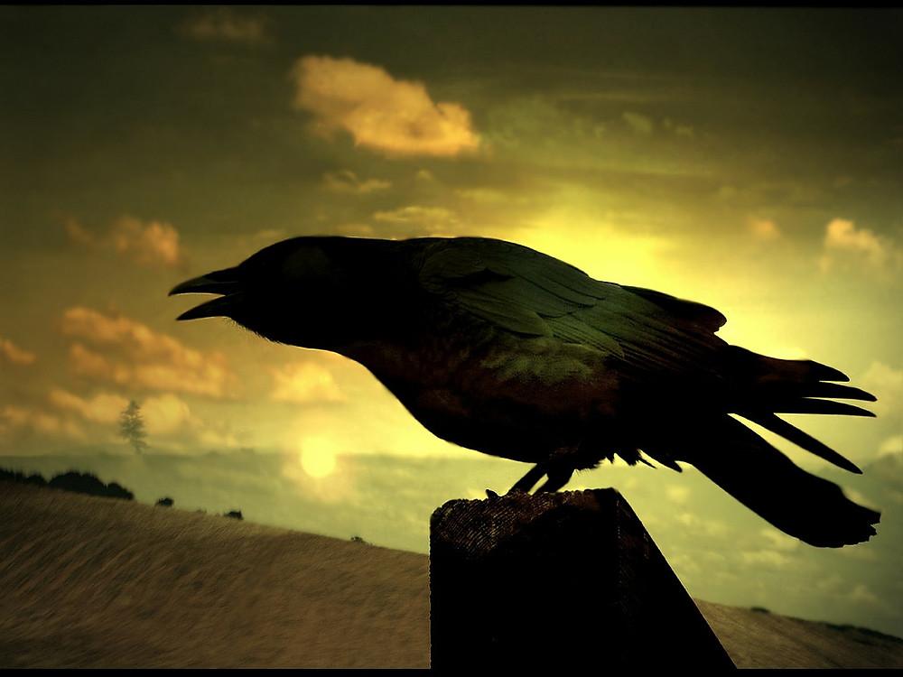 Un cuervo en el ocaso