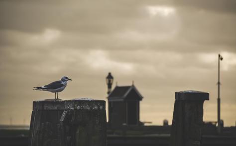 SeaTown - Netherlands