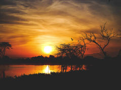 Early Bird - Africa