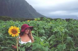Sunflower Field, Eastside, Oahu