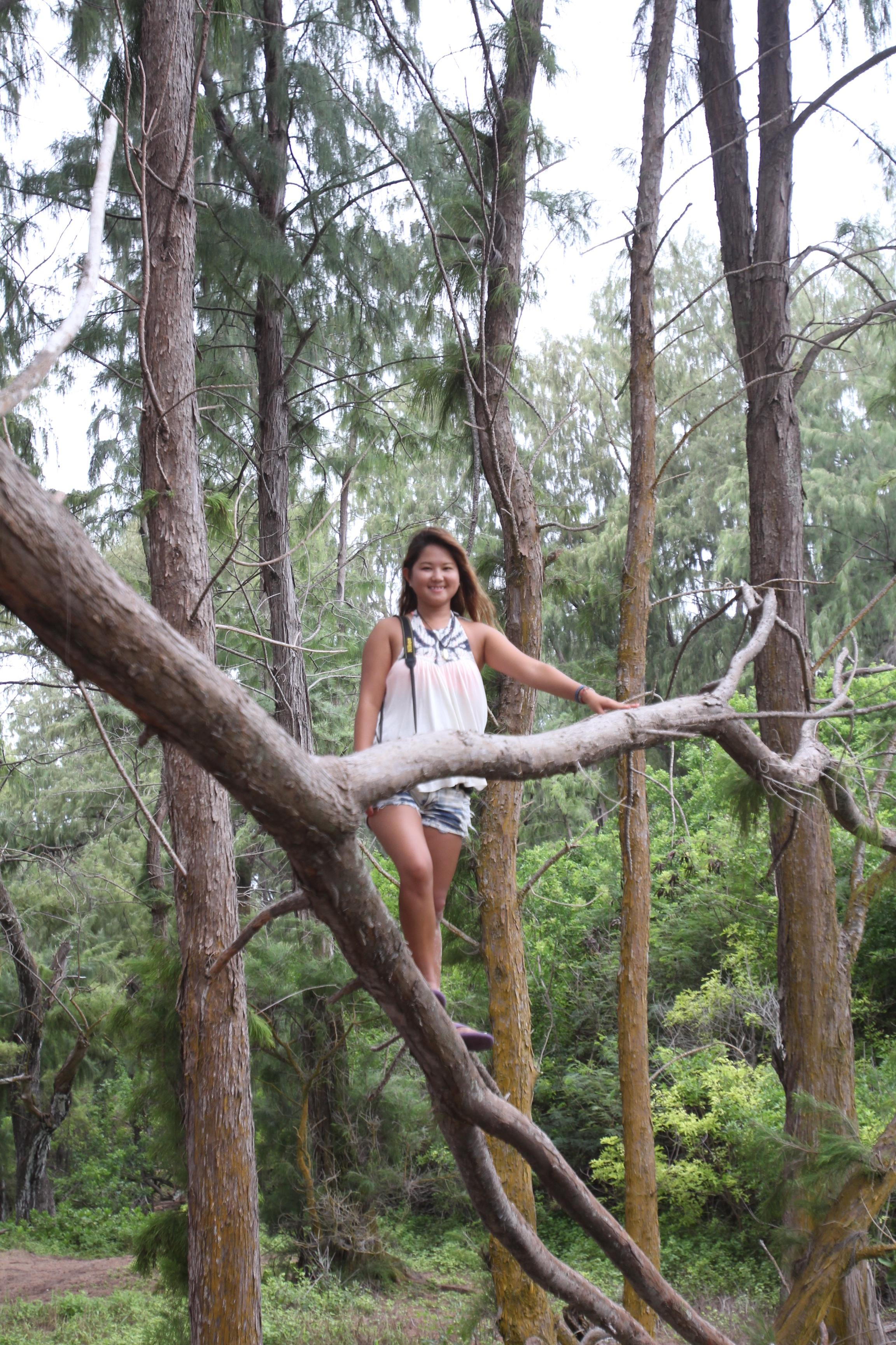 Jungle in Waimanalo, Oahu, Hawaii