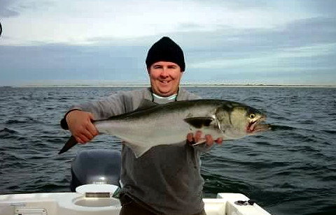 kirk bluefish_edited.jpg