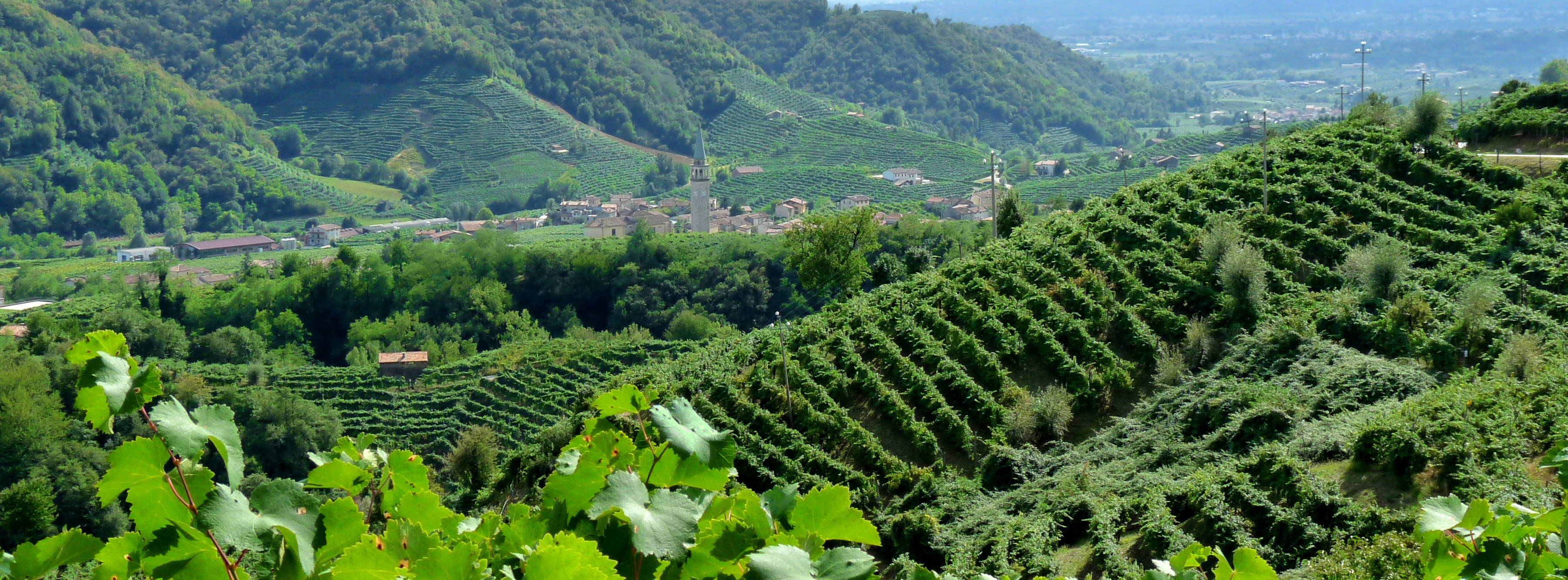 Prosecco region, northern Italy
