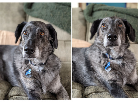 Pet Portrait Reference Photo Guide