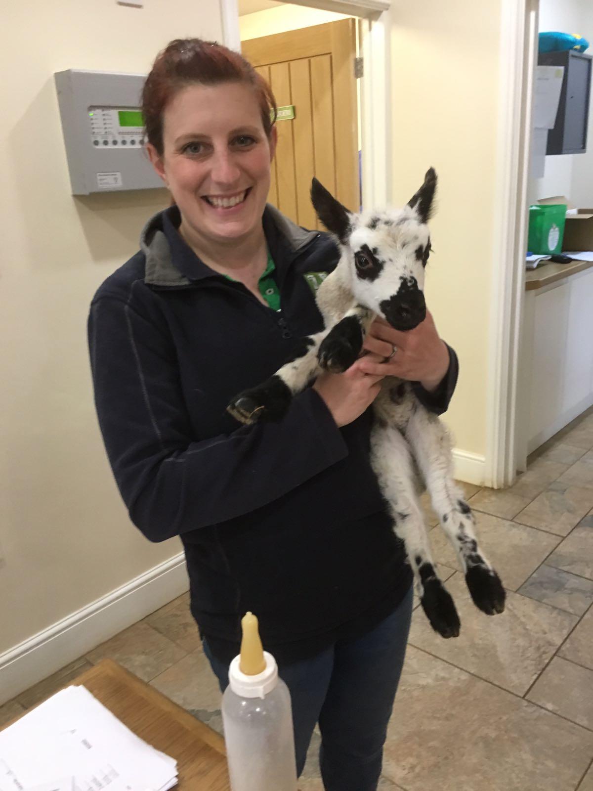 Receptionist Rachel and lamb