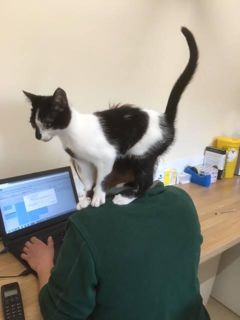 Kitten consultation