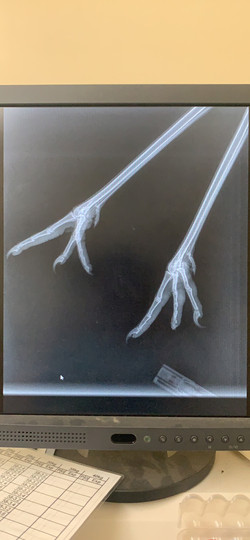 X-ray of a stalk