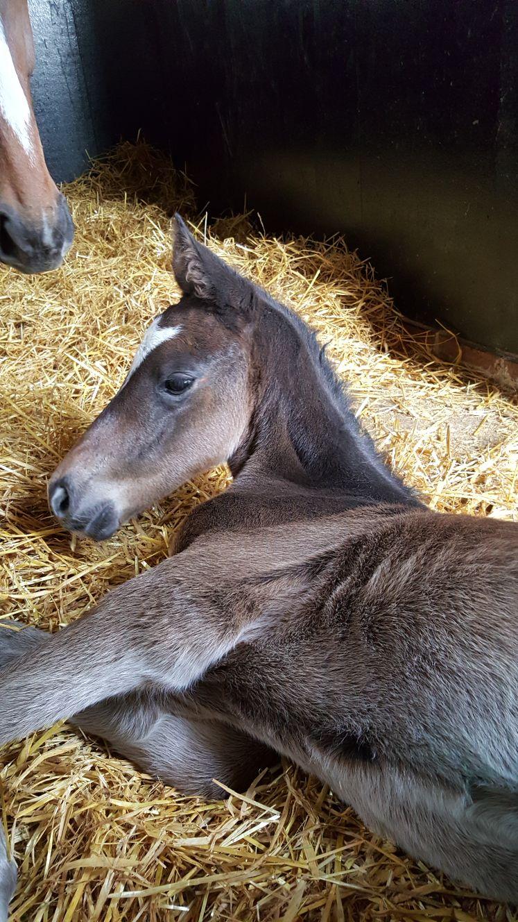 New born Foal