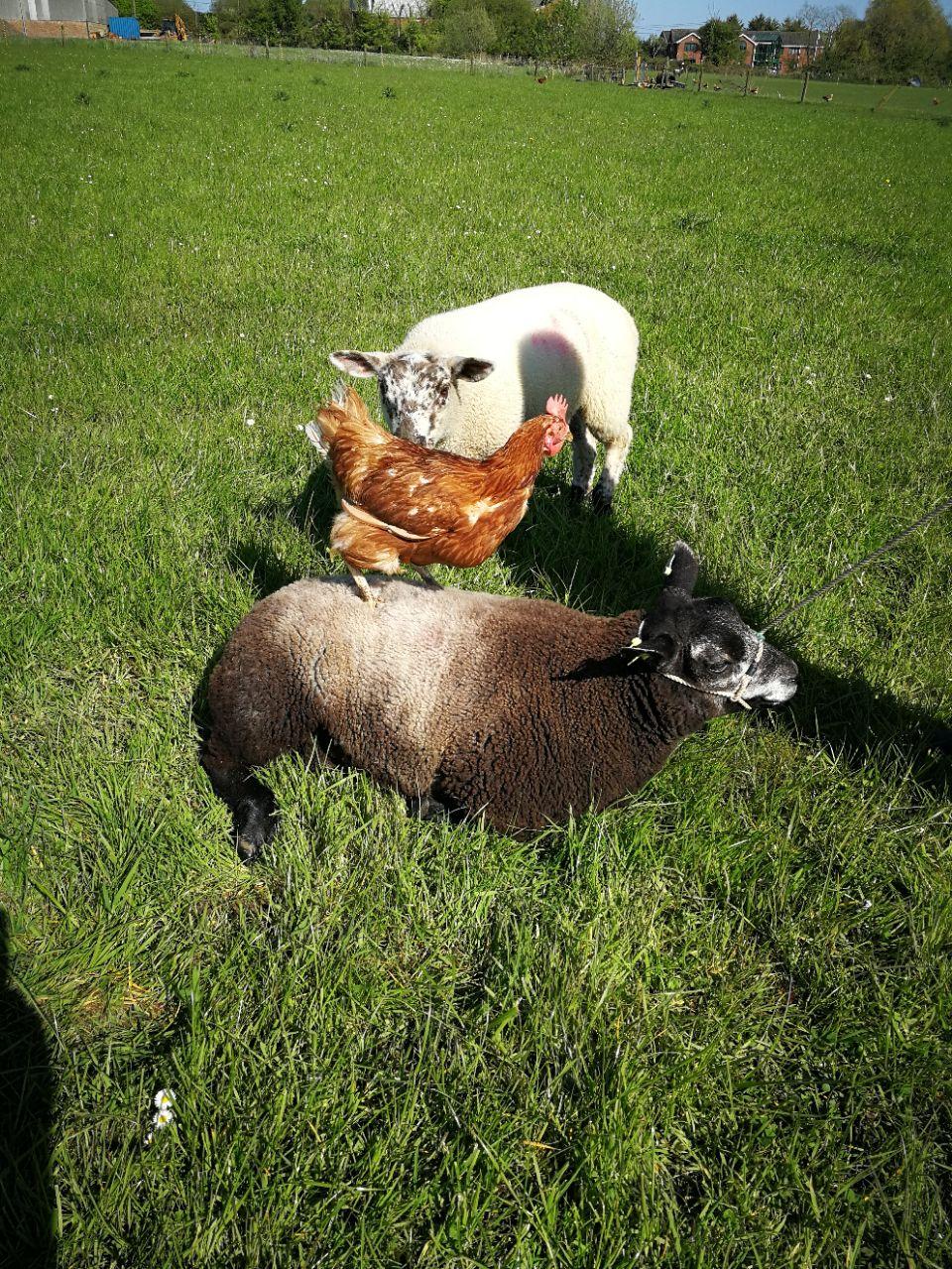 Farm animal patients
