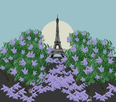 Lilacs in paris