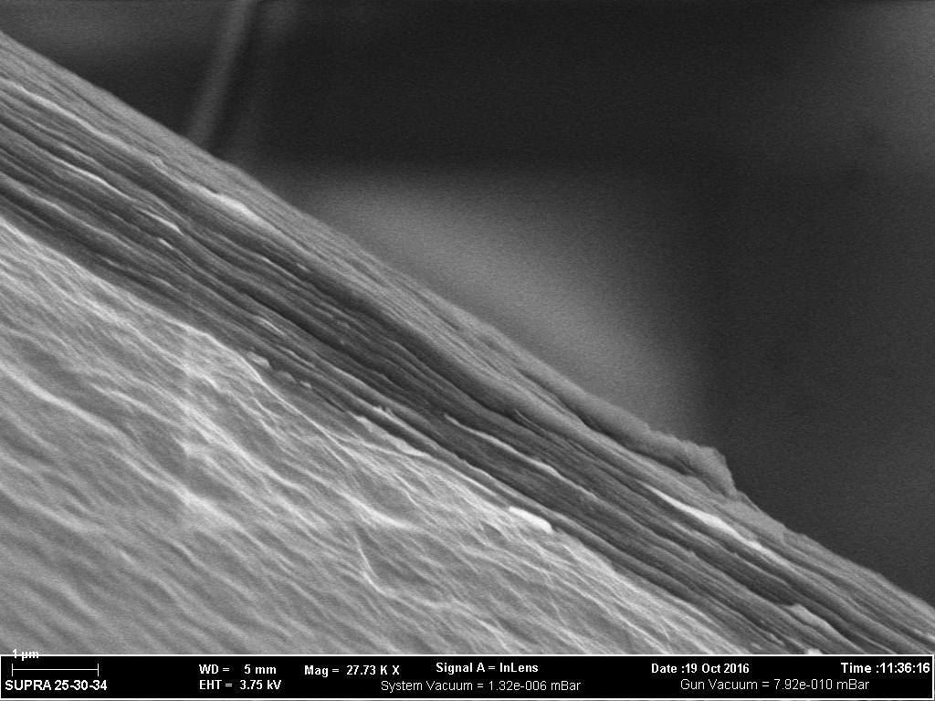 SEM image of graphene sheets