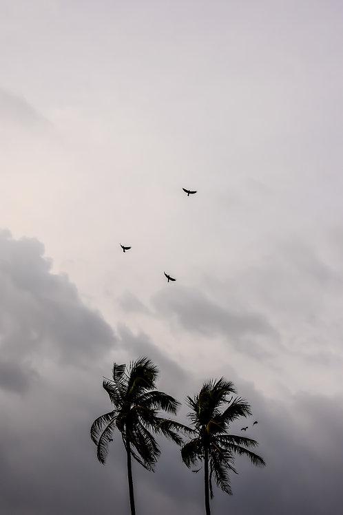 Birds at flight