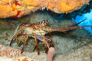 diving-1707742.jpg