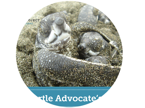 Adopt a Sea Turtle Hatchling