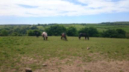 Horse, Exmoor, Pony, Riding, Trekking