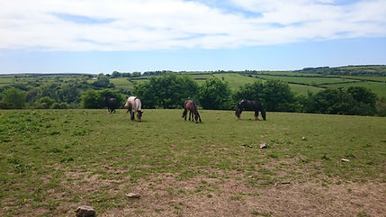 Horse, Exmoor, Pony, Riding, Trekking