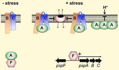 Psp model 2.jpg
