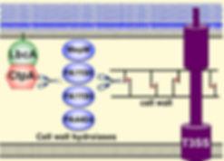 CtpA model.jpg