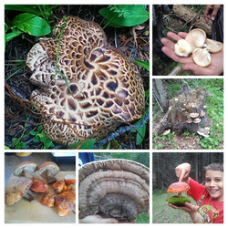Wild Mushroom Harvest 2