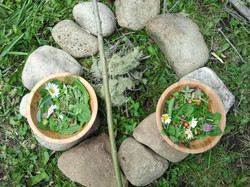 wild greens and flowers harvest