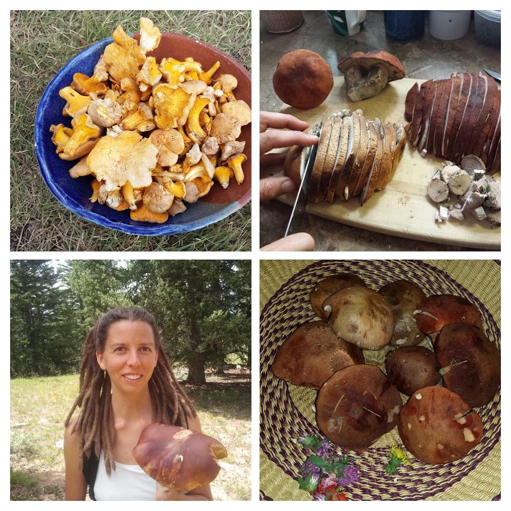 Wild Mushroom Harvest